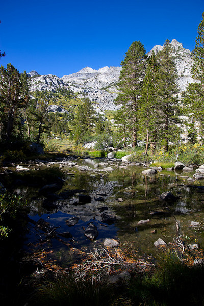 Reflection in Treasure Creek