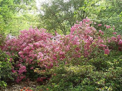 National Arboretum