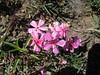 016-wild flowers