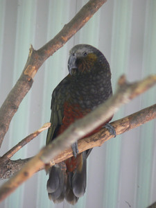 I beliee this is a KEA