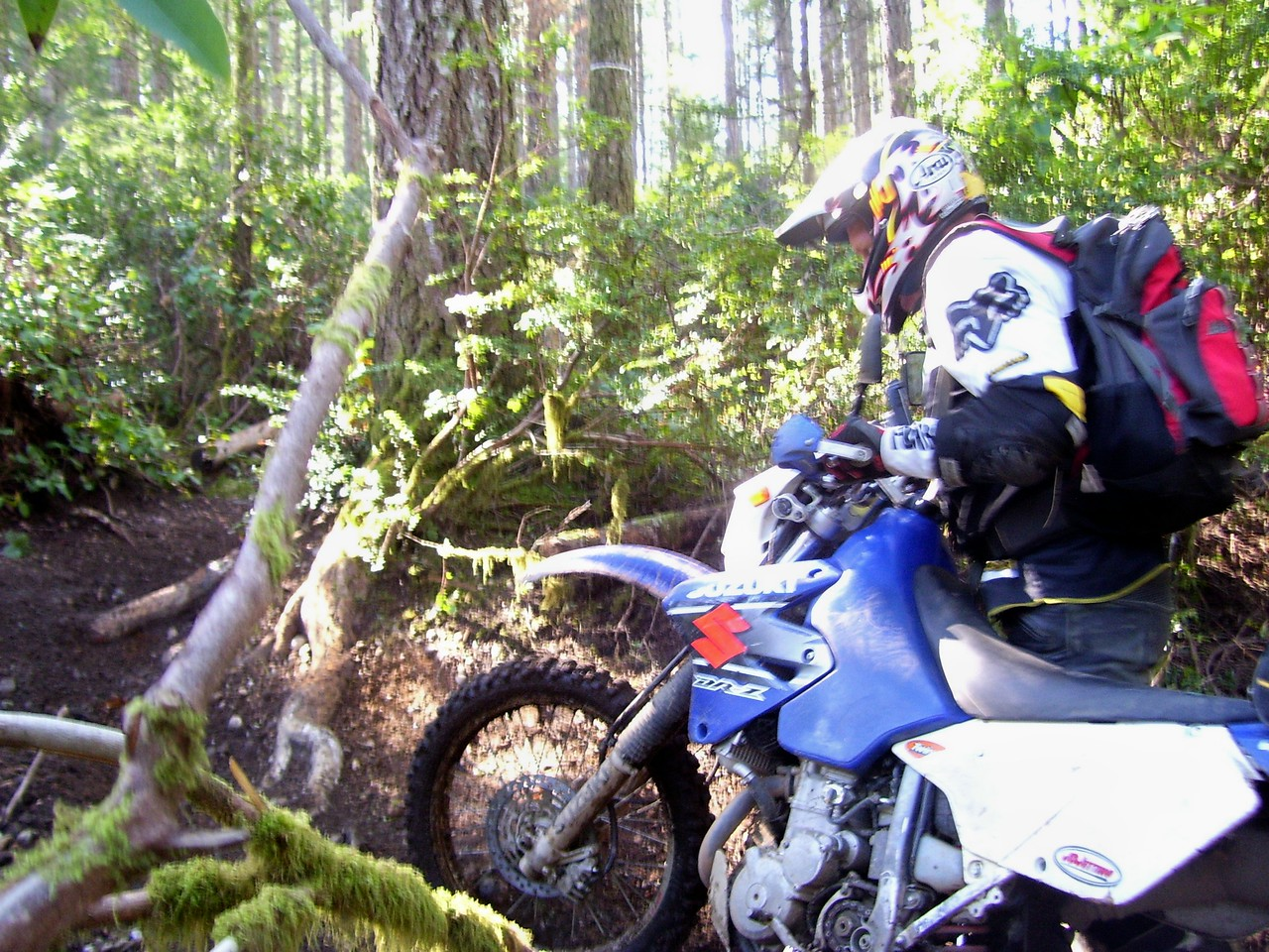Mark M pushing his DRZ through a nasty root section.