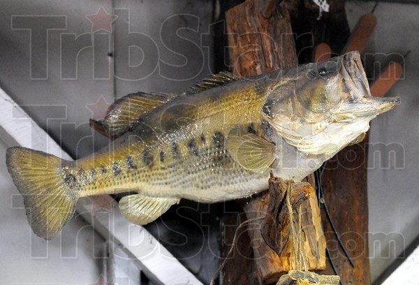 Lunker detail: Dave Watson has this nearly eight pound bass mounted and hanging in the garage of his Sullivan County home.