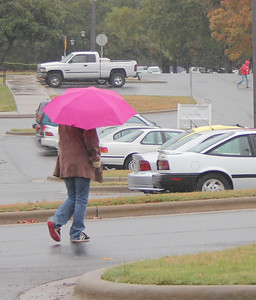 Students and animals try to hide from the rain on November 4th, 2010.