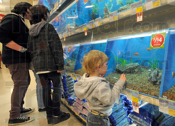 Fish watch: Two-year-old Easton Roberts watche fish swim around in a tank at Pet Smart Friday afternoon. He's shopping with his mother Betsy for the day.
