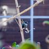 Der kleine Kolibri der ab und zu besuchen kommt
