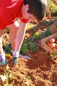 Potato Service Project; Fall 2010.