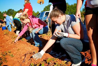 Potato Service Project; Fall 2010.