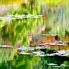 10-25-10 Quarryhill Botanical Garden with AB: Monet treatment of the water reflections
