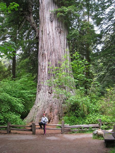 "Prairie Creek Redwood State Park, California - ""Big Tree"" - 267 feet high, 68 feet circumference, approx. age: 1500 years"