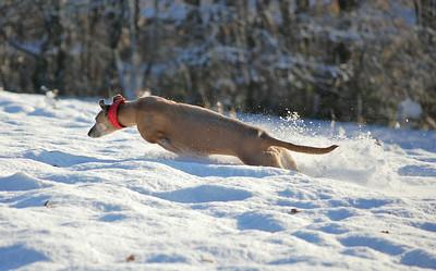 Penny enjoying the snow