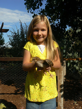 Phoebe Chicken
