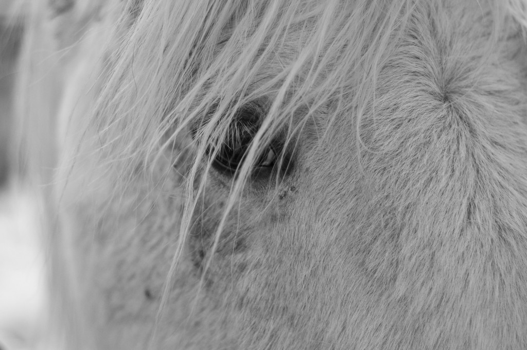 Horse's eye?