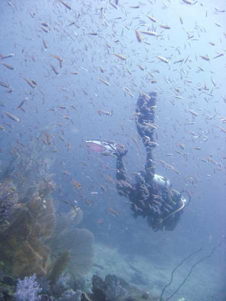 Schools of tiny fish dart through the water seemingly with one mind, swarming in giant syncronized clusters over the reef.