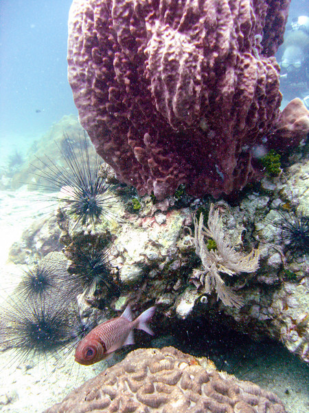 A fish eyes the camera under the looming protection of a coral formation.