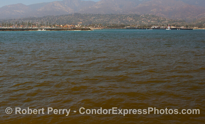 Red tide (mostly Lingulodinium polyedrum) outside Santa Barbara Harbor.  The microscopic photos follow this image.