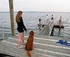 Isabel and Rogue watching over the pier