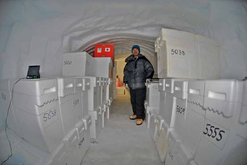 The ice is kept and stored in a separate room before the plane picks them up<br /> <br /> Photo: Kenji Kawamura