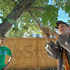 "Tree master: Todd Nation trims a tree in the 600 block of Poplar Saturday afternoon. Watching at left is one of his helpers Matt Zinaman. Nation is certified as a ""Tree Master""."