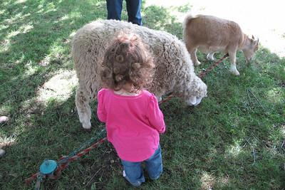 Pershing Fall Festival...petting zoo