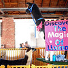 Discover the magic of llamas
