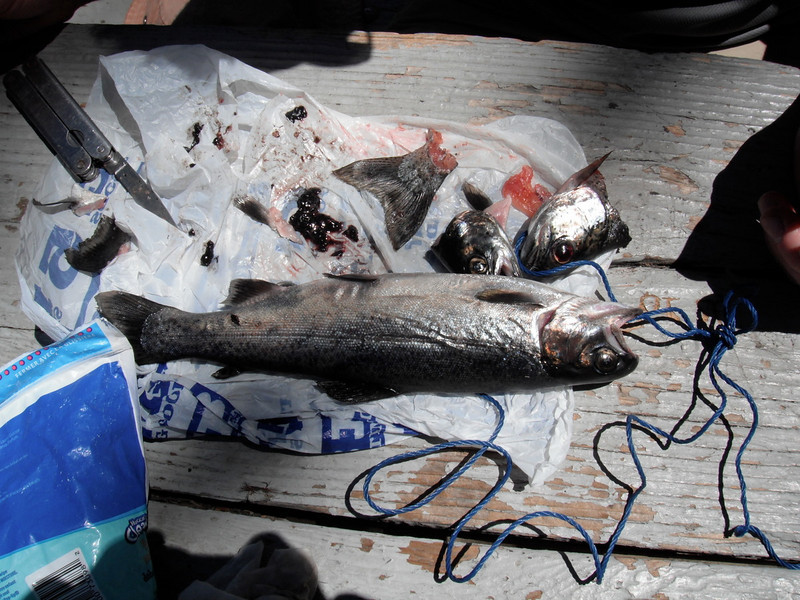 The fish from Tioga lake, 3 made a little lunch for us.