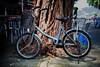 bicycle cheung chau island
