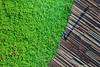 singapore flyer grass