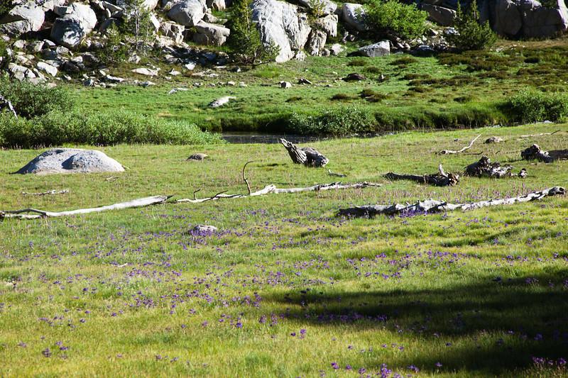 Meadow below Ruby Lake
