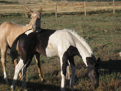 Filly and Colt, Zion Mountain Ranch