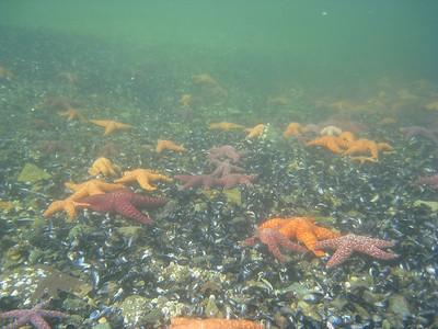 Sea stars are abundant