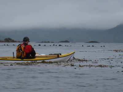 "A ""raft"" of sea otters, perhaps 50 or so."