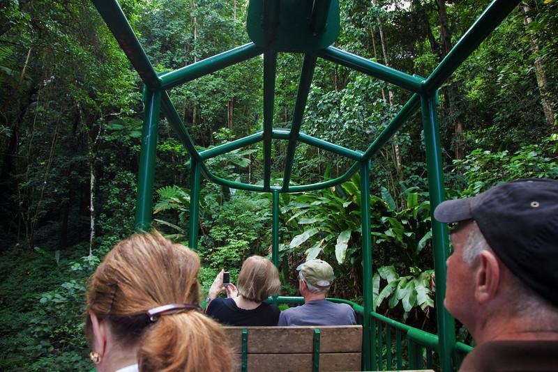 rainforest tram st lucia