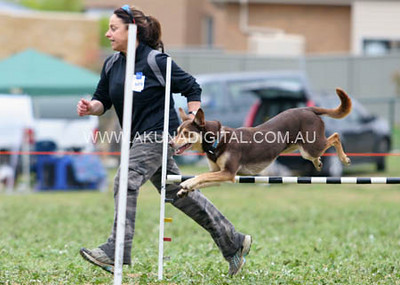 Morning Events Bendigo Dog Agility Trials