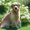 4531 Slammer 4th b-day Aug 6 2010 crop