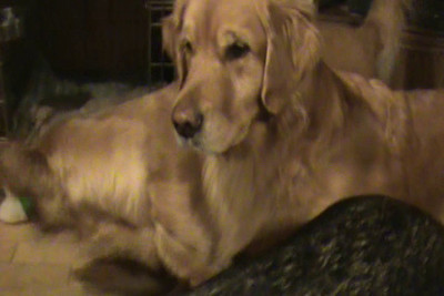 January Videos 2010