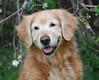 2376 Sasha May 5 2010 crop