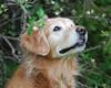 2382 Sasha May 5 2010 crop