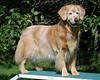 6833 Sasha Sept 11 2010