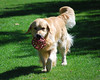 6819 Slammer Sept 11 2010
