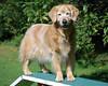 6835 Sasha Sept 11 2010