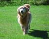 6836 Sasha Sept 11 2010