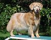 6832 Sasha Sept 11 2010