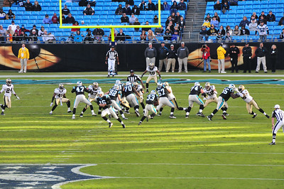 Panthers 2010