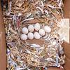 Willow's Nest February 2013