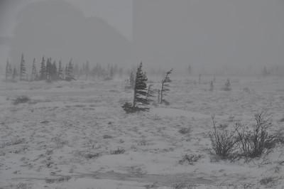cold ecotone