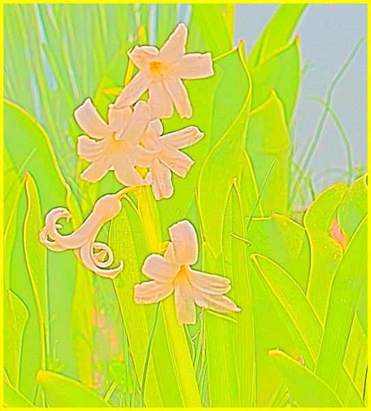 spring impression 01 - 4-7-2011