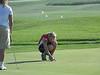 J-g golf41