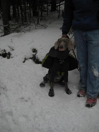 Mt Greylock Winter Hike
