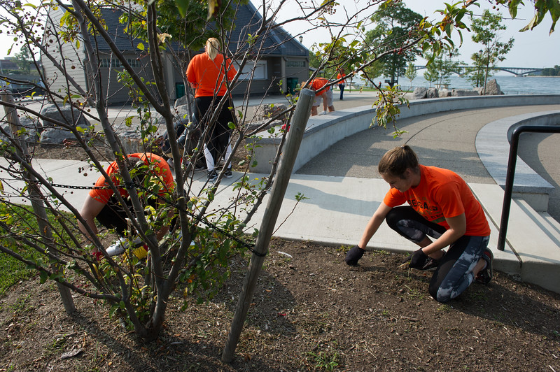 Students doing volunteer clean up and weeding at Broderick Park during Bengal Dare to Care Day at Buffalo State College.