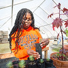 Early Undergraduate Research Opportunity (EURO) Program student Laquesha Phillips working in greenhouse at SUNY Buffalo State College.